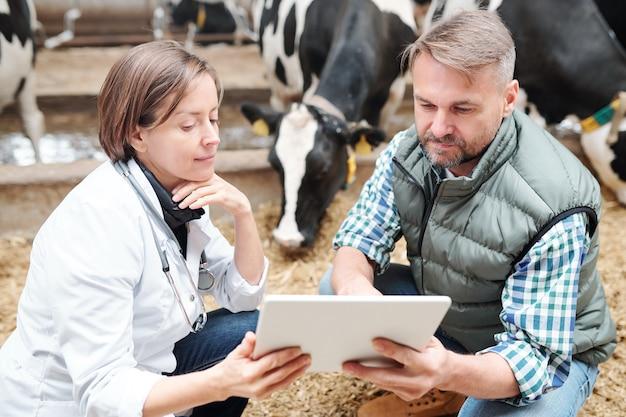 Joven trabajador confiado de granja haciendo presentación de nuevo equipo para granja lechera o vacuna para vacas al veterinario