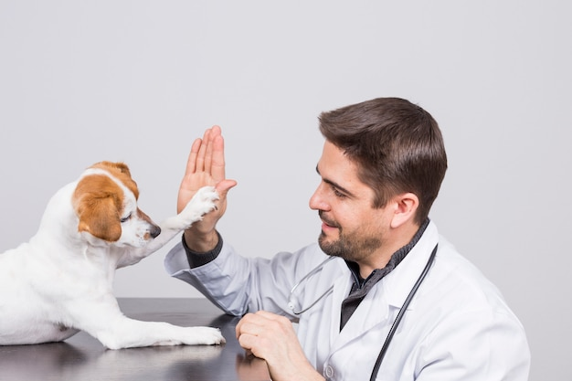 Joven veterinario con estetoscopio, jugando con un lindo perro pequeño choca esos cinco.