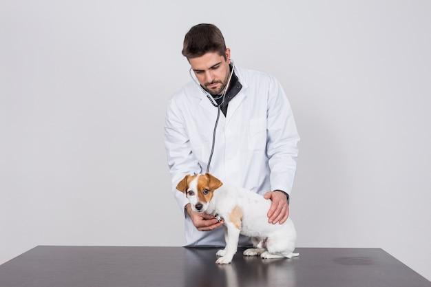 Joven veterinario examinando un lindo perrito usando un estetoscopio