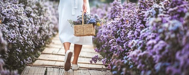 Joven viajero feliz mujer asiática con vestido de turismo en margaret aster campo de flores en el jardín en chiang mai, tailandia