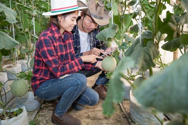 Jóvenes agricultores están analizando el crecimiento de los efectos del melón en granjas de invernadero.