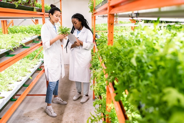 Jóvenes biólogas asiáticas y africanas con batas blancas trabajando en invernadero y estudiando nuevos tipos de plantas
