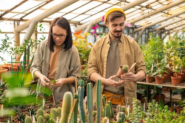 Jóvenes empleados de vivero multiétnicos de pie en plantas de cactus y verificándolo mientras trabajan en una granja de invernadero
