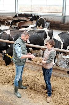 Una de las jóvenes trabajadoras de una gran granja lechera mostrando a su colega una muestra de heno para alimentar a las vacas y describiendo su calidad.
