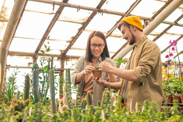 Jóvenes trabajadores de vivero multiétnicos positivos que examinan el cactus mientras lo cultivan en invernadero