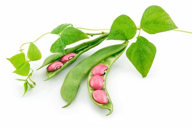 Judías maduras con semillas y hojas aisladas sobre fondo blanco