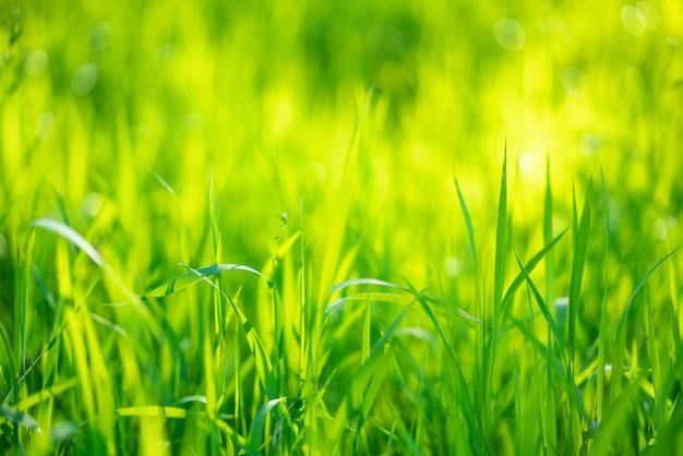 Jugosa hierba verde, enfoque suave de fondo hermoso