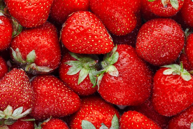 Jugosas fresas rojas maduras naturales