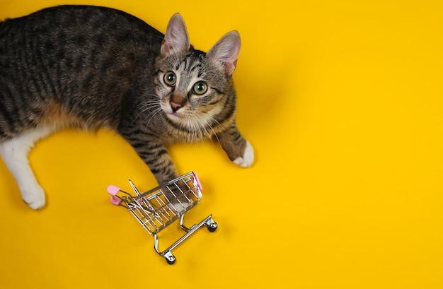 Juguetón gato se juega con un mini carrito de la compra sobre un fondo amarillo. vista superior