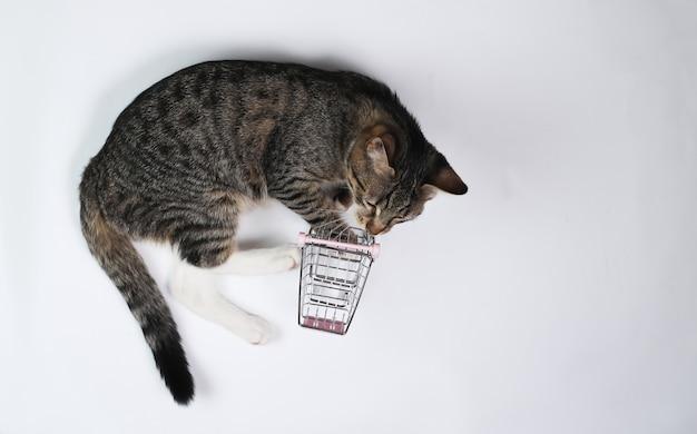 Juguetón gato se juega con un mini carrito de compras sobre fondo blanco. vista superior