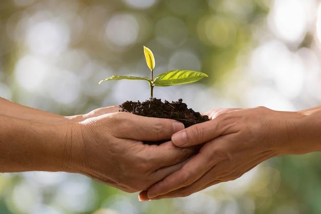 Junte las manos que sostienen la planta verde junto en fondo del bokeh