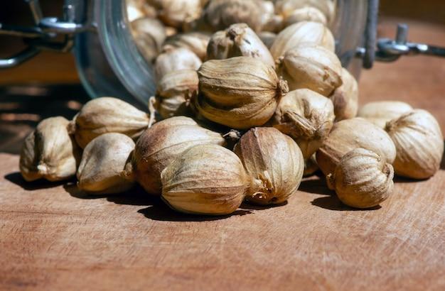 Kapulaga jawa o cardamomo javanés (amomum compactum), un tipo de cardamomo que se utiliza como especia para platos, hierbas y medicinas, en foco superficial