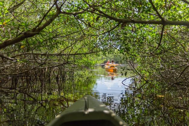 Kayak en el parque nacional everglades, florida, ee.uu.