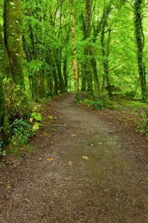 Killarney parque rastro del bosque exuberante hdr