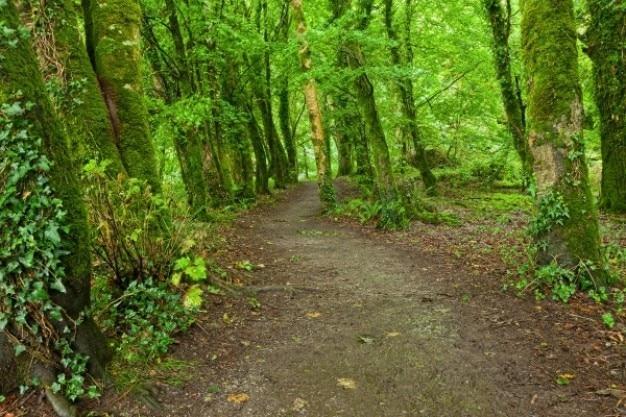 Killarney parque rastro del bosque hdr