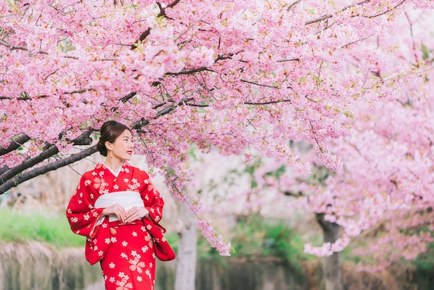 Kimono que lleva de la mujer asiática con las flores de cerezo, sakura en japón.