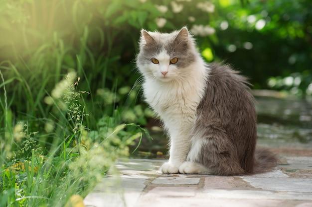 Kitty jugando en el jardín bajo el sol. gato en el prado. gato gris esponjoso en la cama de flores. lindo gatito en el jardín