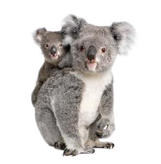 Koala y su bebé - phascolarctos cinereus