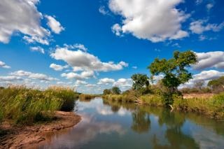 Kruger parque árbol del paisaje