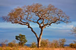 Kruger parque paisaje hdr nube