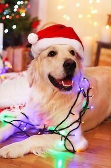 Labrador con gorro de papá noel con guirnalda sobre piso de madera y fondo de decoración navideña