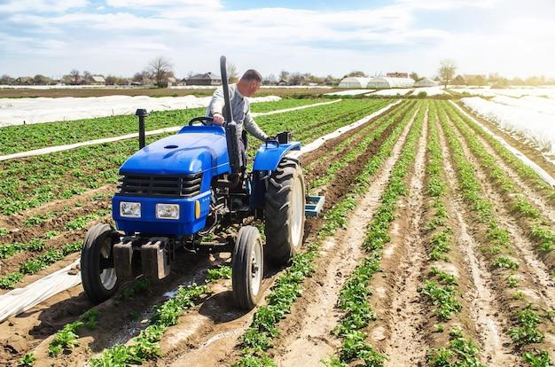 La labranza del agricultor cultiva una plantación de campo de papas jóvenes de la riviera. eliminación de malezas y mejorado.