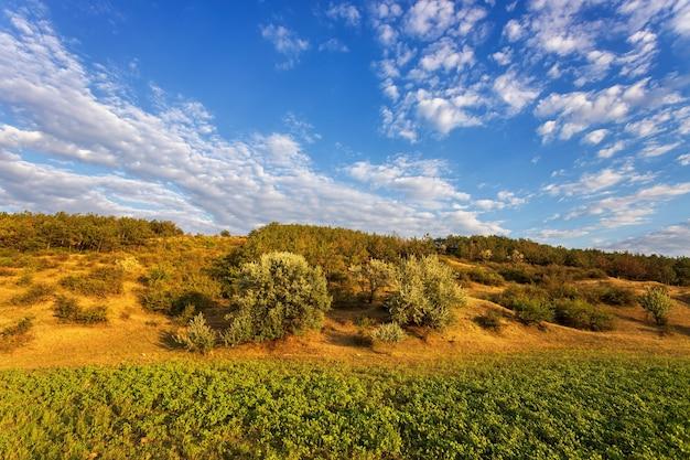La ladera está cubierta de árboles, arbustos y pasto, contra un cielo azul con nubes blancas. luz cálida de la tarde
