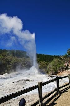 Lady knox geyser en el parque termal wai-o-tapu, nueva zelanda