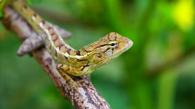 Un lagarto sentado en una rama.