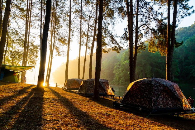 Lago y bosque al amanecer