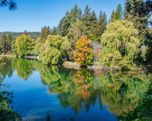 Lago claro con reflejo de nubes rodeado de bosque
