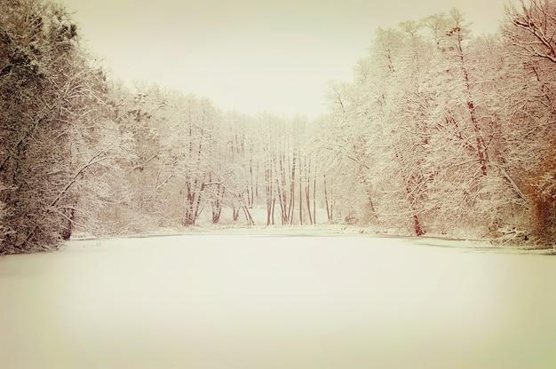 Lago cubierto de nieve y árboles que crecen a su alrededor.