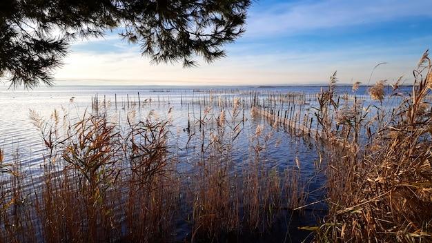 Lago de la laguna de valencia con redes de pesca entre las cañas.