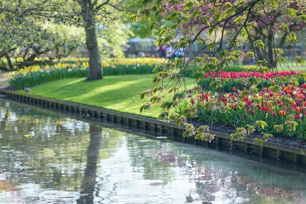 Lago en el parque keukenhof durante el tiempo de primavera. enfoque selectivo