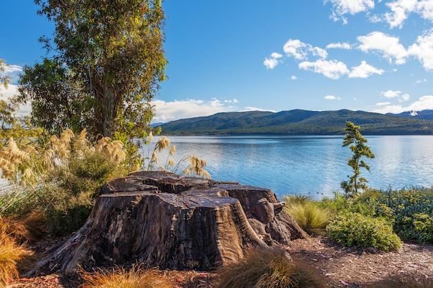 Lago te anau con gran tocón de árbol en primer plano, fiordland, nueva zelanda