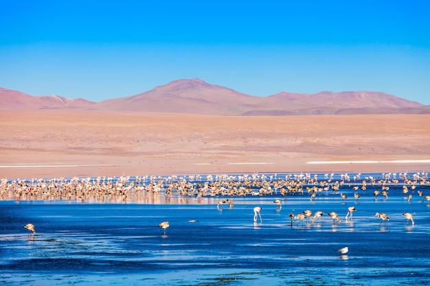 Laguna colorada lago
