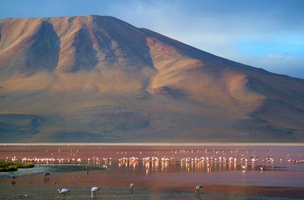 Laguna colorada o laguna roja con flamencos, lago salado en la meseta del altiplano, bolivia