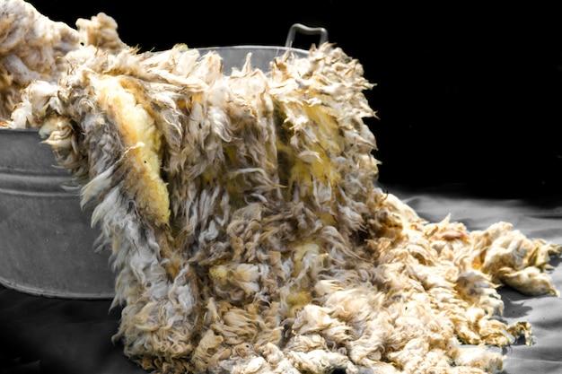 Lana de lana cruda recién cortada antes de ser hilada