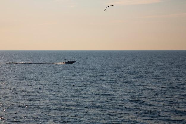 Lancha navegando en el mar a gran velocidad. una gaviota se cierne sobre el barco. pesca en el mar al amanecer