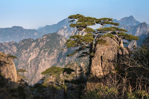 Landscpae hermoso de huangshan (montaña amarilla) con las nubes del mar en la provincia de anhui de china del este.