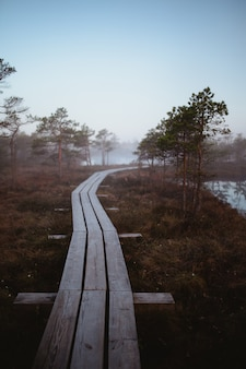 Largo y estrecho puente de madera que pasa a través de los árboles