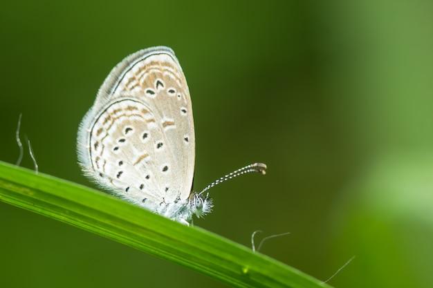 Las mariposas agarran las hojas después de la lluvia.