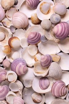Lay flat de conchas marinas