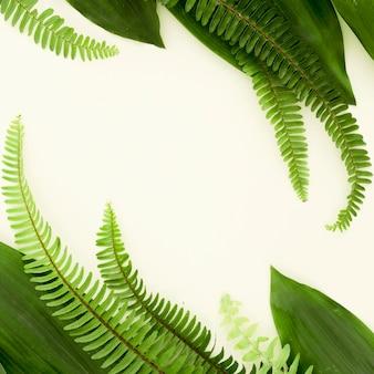Lay flat de diferentes hojas y helechos con espacio de copia