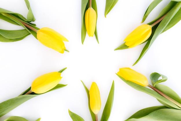 Lay flat con flores de tulipán amarillo sobre fondo blanco. concepto de tarjeta de felicitación para pascua, día de la madre, día internacional de la mujer, día de san valentín.