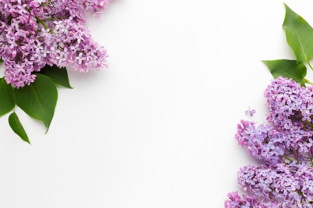 Lay flat del hermoso concepto de marco lila