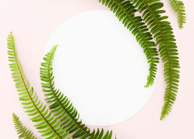 Lay flat de hojas de helecho con espacio de copia