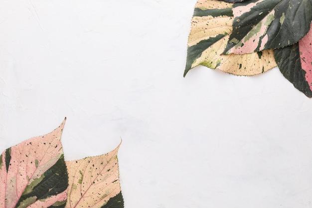 Lay flat de hojas de otoño de colores