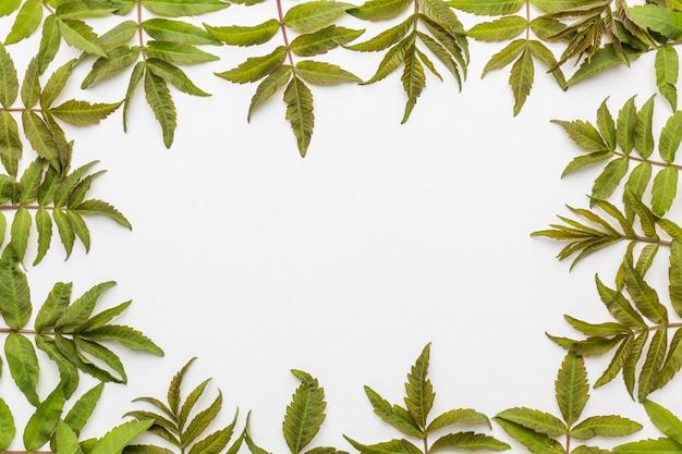 Lay flat de marco de hojas con espacio de copia