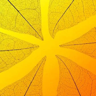 Lay flat de textura de hoja translúcida coloreada